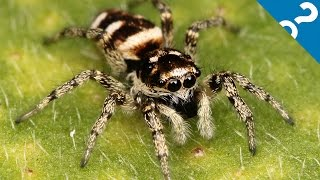 5 Amazing, Beautiful, Not-That-Terrifying Spiders | What the Stuff?!