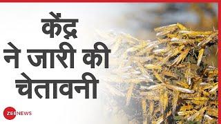 Locust attack: टिड्डियों के हमले को लेकर 16 राज्यों को केंद्र ने alert जारी किया | Zee News - ZEENEWS