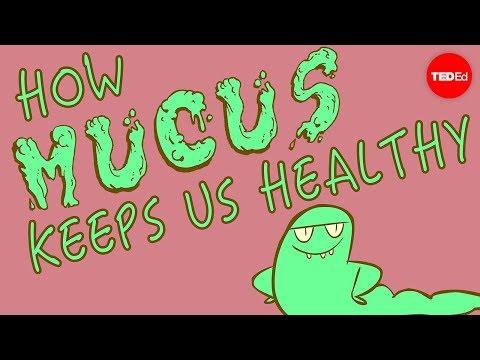 How mucus keeps us healthy - Katharina Ribbeck