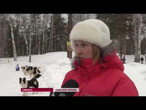 Больше сотни команд приняли участие в соревнованиях «Снежные хвосты»