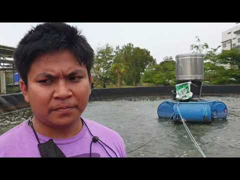 VDO-Biofloc-บอมเด็กเลี้ยงปลา