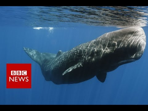 connectYoutube - The whales that 'talk' with accents - BBC News