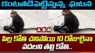 Viral Video: పిల్ల కోతి చనిపోయి 10 రోజులైనా...  వదలని తల్లి కోతి.. | Hindhupuram | ABN - ABNTELUGUTV