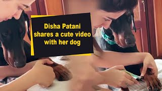 Disha Patani shares a cute video with her dog - IANSINDIA