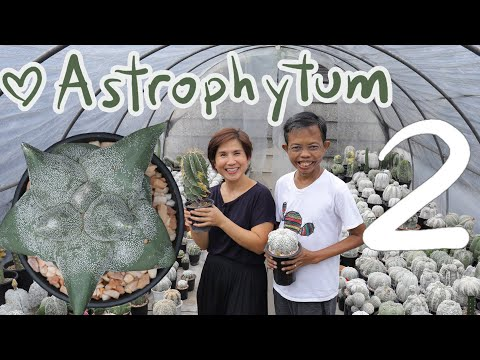 รู้จัก-Astrophytum-ep.2/3-|-Ca