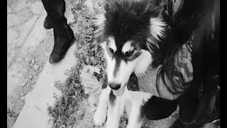 Una impactante grabación, fue la evidencia para salvar a un perro del maltrato