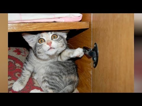 connectYoutube - LAUGH extremely hard at FUNNY ANIMALS - Funny ANIMAL VIDEOS compilation