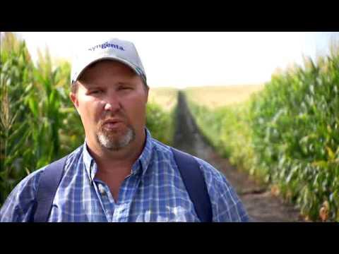 Download Youtube mp3 - TermelÅ?i tapasztalatok a Quilt Xcel-lel : quilt xcel fungicide - Adamdwight.com