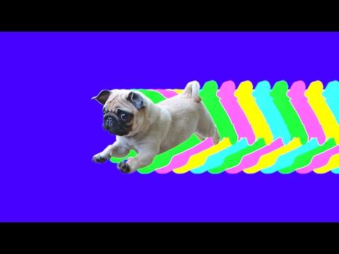 I Wanna Be Your Dog (The Fraktopus Remix, MDMA Trip, Droga visual e.e Trippy Visual)