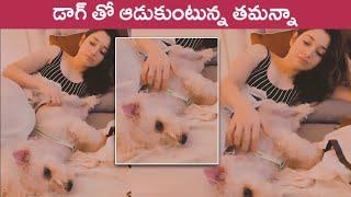 Tamanna Bhatia Playing With Her Pet Dog | Actress Tamanna | Rajshri Telugu - RAJSHRITELUGU