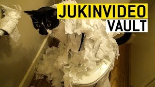 Funny Cat Videos from the JukinVideo Vault