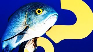 So Long, as Depression Tanks for the Fish | HowStuffWorks NOW