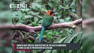 Identifican 250 aves exóticas en zona de amortiguamiento de Bosawás - Nicaragua