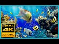 The Best 4K Aquarium for Relaxation II  Relaxing Oceanscapes - Sleep Meditation 4K UHD Screensaver