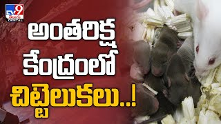 Mouse sperm stored on International Space Station produces healthy offspring - TV9 - TV9