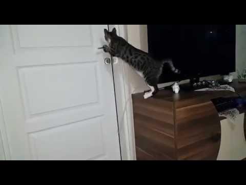 crazy cat fight