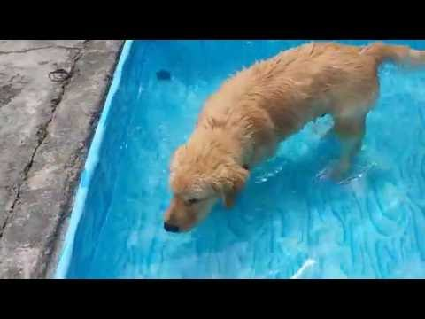 Related video tblgrx pkj4 for Mp3 para piscina