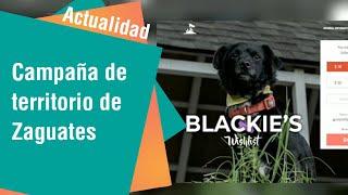 Campaña de Territorio de Zaguates para ayudar a animales | Actualidad