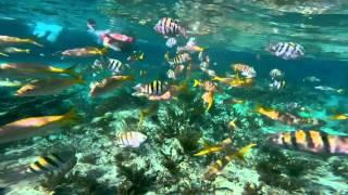 Grand Bahama Island - Sea Safari Snorkel by Boat
