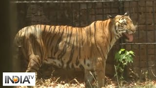 Vadodara zoo sprays water around animal cages to beat the heat - INDIATV