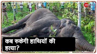 Kerala में हाथियों पर अत्याचार का सबसे बड़ा सच   Kerala pregnant elephant death - ZEENEWS