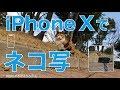 iPhoneXでネコ写・猫動画を撮ってきました/公園のノラちゃんサイコー!