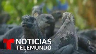 Las Islas Galápagos corren el riesgo de desaparecer   Noticias Telemundo