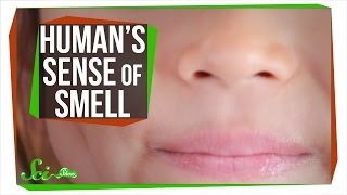 Your Sense of Smell Is Better Than You Think