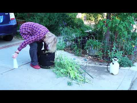Your CHILL Video for the Week! Morning Garden Chores with Music
