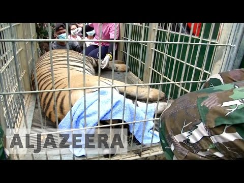 Thailand's 'Tiger Temple' granted new life