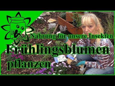 Nahrung für Insekten | Frühlingsblumen pflanzen | Insektenfreundliche Pflanzen | Garteneinkochfee
