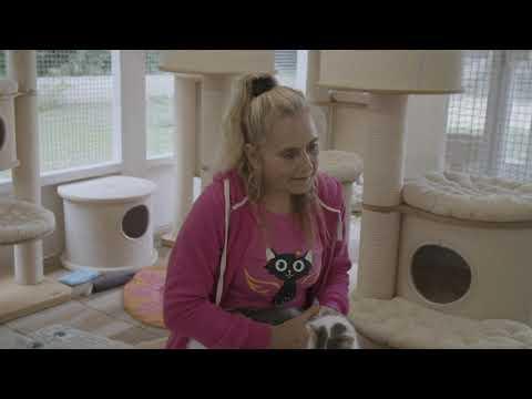 Schutzengeldorf der behinderten Katzen