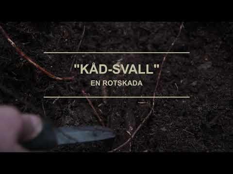 Att fläta korgar i granrot med Erna-Lill Lindén