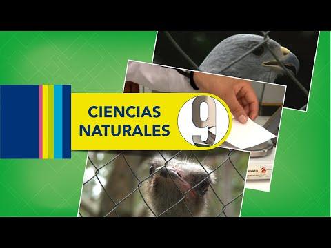 Los elementos se organizan #26, 9.º Ciencias Naturales Lección Educativa