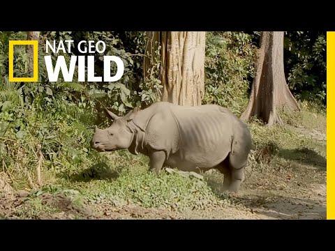 Protecting Rhinos in Kaziranga National Park | Nat Geo WILD