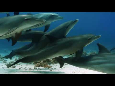 Oceans Our Blue Planet - Svensk trailer Cosmonova
