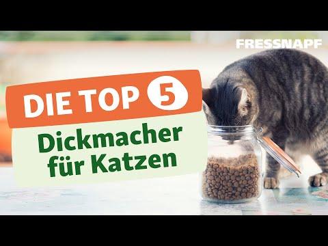 Top 5 Dickmacher für Katzen – und worauf ihr bei der Fütterung achten solltet