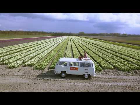 Flevoland Tulip fields | Holland photo