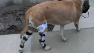 how to make a homemade knee brace for my dog