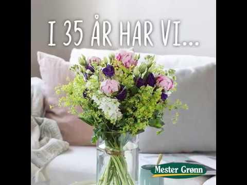 Mester Grønn fyller 35 år med gode jubileumstilbud