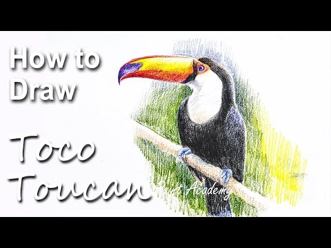 How to Draw Toco Toucan Bird in Watercolor Pencil