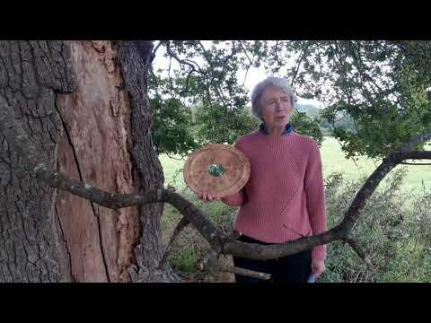 Jill Butler: Arboricultural Association Award 2020 Winner