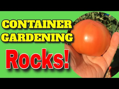 🍅CONTAINER GARDEN RESULTS 🌾 EARTHBOX 🥒GROW BAGS 🥕WICKING TUBS 🌽 WHAT IS BEST❓❓  🌱
