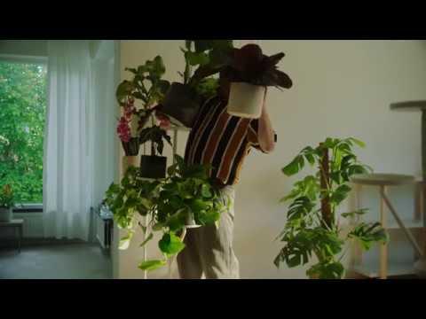 Kasveja, jotka viihtyvät kotonasi. (15s)