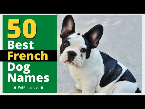 Top 50 best french dog names with meaning 2021 !  Unique dog names ! Pet names