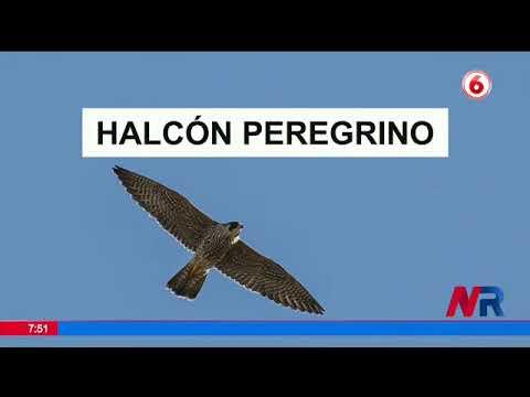Aves migratorias están de visita en Costa Rica