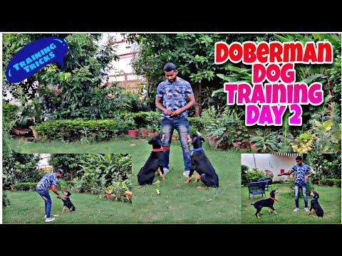 Doberman Dog Training Series- Episode 2 || Dog Training in Hindi