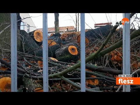Flesz Gliwice / Dlaczego wycięto drzewa przy ul. Kozielskiej?