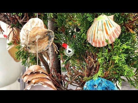Conchas que tienen vistas a la bahía