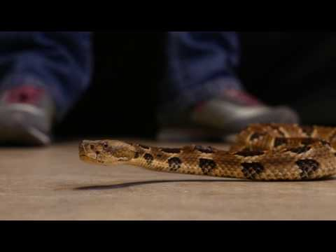 Illinois Team Works to Protect Snakes on the Plains (and Elsewhere)